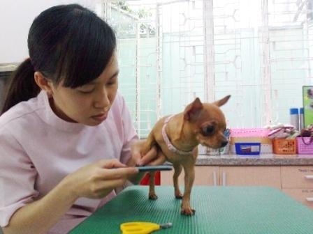 http://imgs.vietnamnet.vn/Images/vnn/2014/05/27/10/20140527104802-lamdepcho.jpg