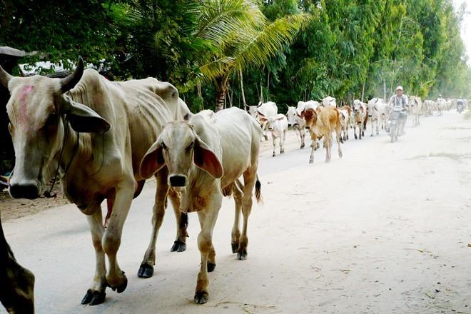 Chợ bò lậu biên giới