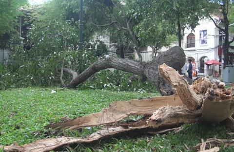 Nhánh cây rơi làm 4 người bị thương trong công viên