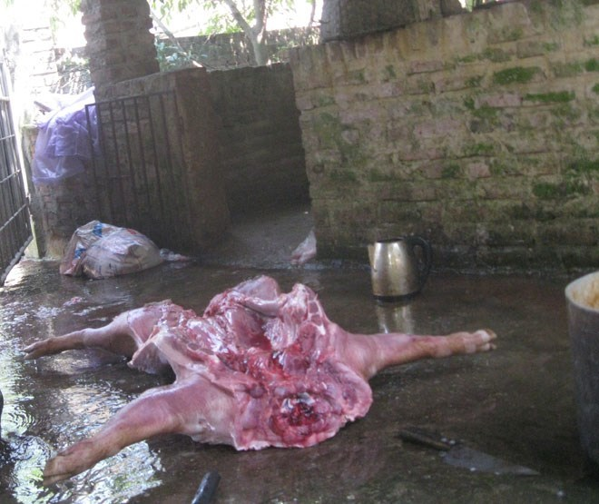 Vào lò chuyên mổ lợn chết, lợn bệnh ở Hà Nội