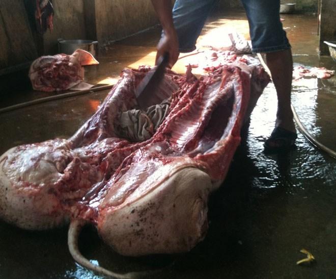 """Thịt lợn chết """"lết"""" từ lò mổ tới bàn ăn"""