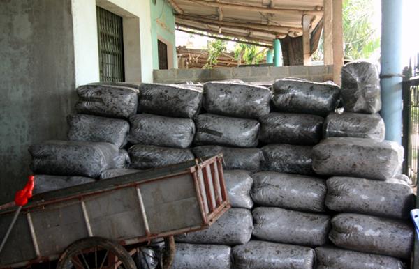 Bí ẩn người đầu cơ trăm tấn lá vải cho nước ngoài