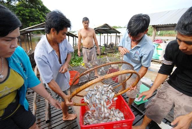 miền-Tây, cá, đặc-sản, món-nhậu, nông-dân, tiền-tỷ