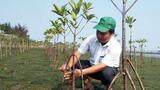 Tăng cường rừng ngập mặn, bảo vệ đầm phá ven biển