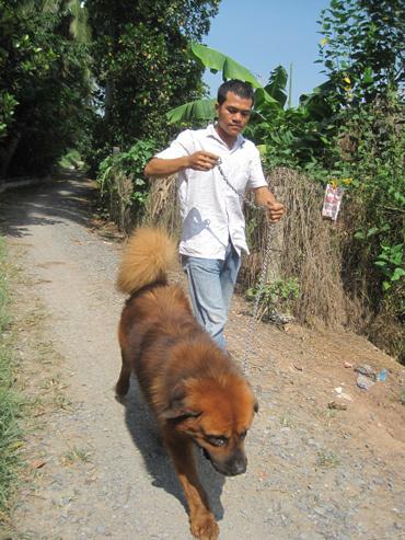 Thú chơi chó ngao tiền tỷ ở Sài Gòn