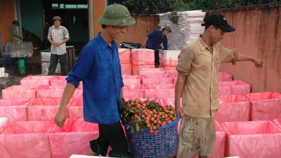 Việt Nam không nhập vải tươi Trung Quốc
