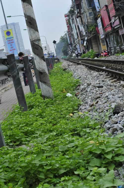 Rau sạch trên kênh thối: Hà Nội 'khổ quá hóa khôn'