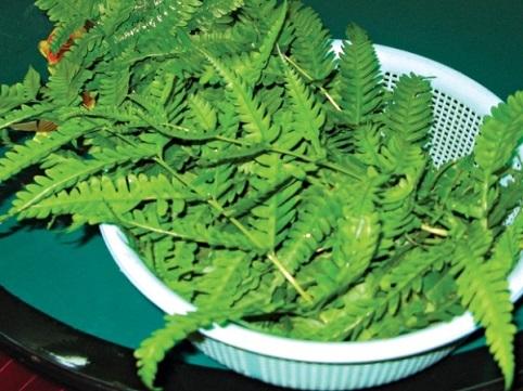rau dớn, rau rừng, hương rừng, đặc sản