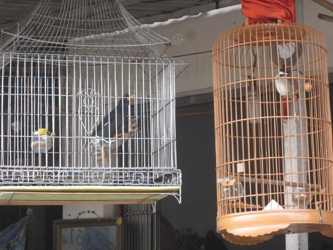 chim-cảnh, World Cup, nuôi-chim, vật-cưng, kiếm-tiền, bóng-đá, mồi-nhậu
