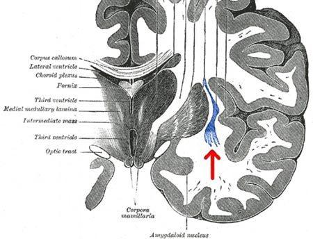 bộ não, linh hồn, sự tỉnh táo, trạng thái có ý thức, vùng hạch nền, công tắc