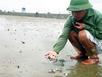 Quảng Ninh: Tôm, cá, ghẹ chết bất thường bên lọ thuốc 'lạ'