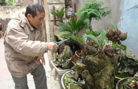 Ngõ phố bonsai độc nhất Hà Thành