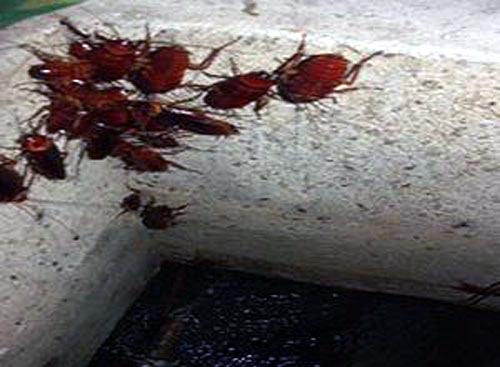Khiếp sợ nước ăn bể ngầm, giá chân gà nửa triệu