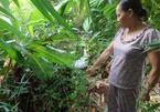 29 tuổi, sòn sòn đẻ 8 con ở Hà Nội - ảnh 9