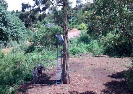 Đào 'nghĩa địa' tìm báu vật gỗ mục thời tiền sử