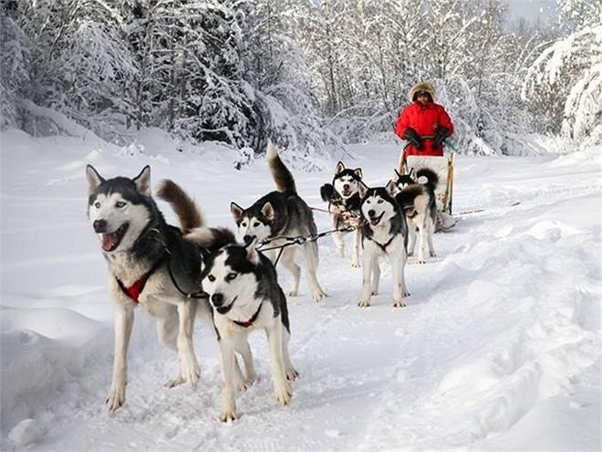 Best Dog Sledding Ottawa