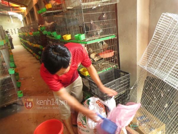 Trai gốc Hà Nội bỏ du học về nuôi chim thu tiền tỷ