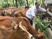 Tốc độ nhập bò Úc vào Việt Nam tăng khủng khiếp