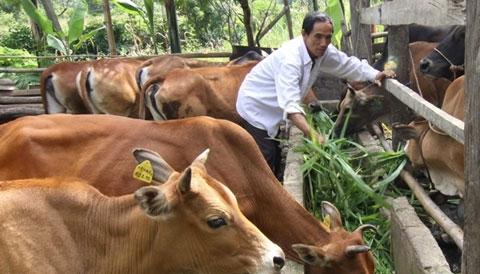 bò-Úc, bò-Việt-Nam, Australia, nhập-khẩu, Vissan, vệ-sinh-an-toàn-thực-phẩm