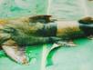 Nuôi thủy quái tiến vua phục vụ đại gia