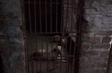 Giết chó kiểu Việt Nam gây chấn động báo Tây