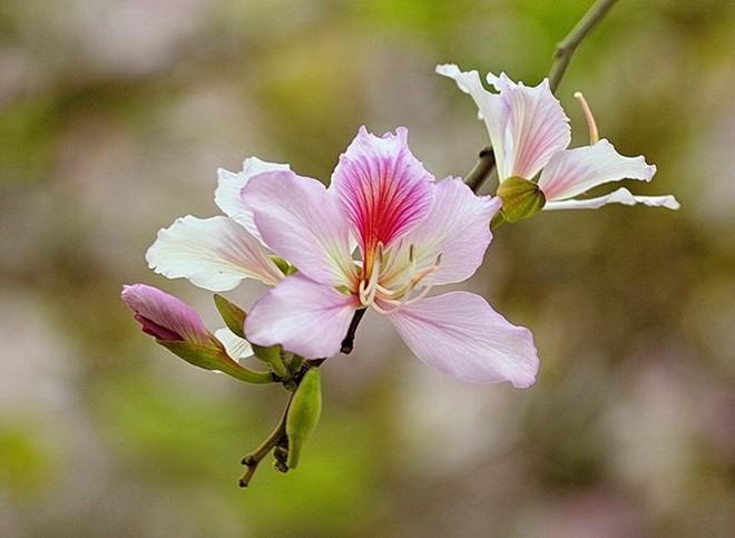 mùa hoa, lộc vừng, hoa ban, hoa sữa, hoa dã quỳ, hoa đỗ quyên, tam giác mạch