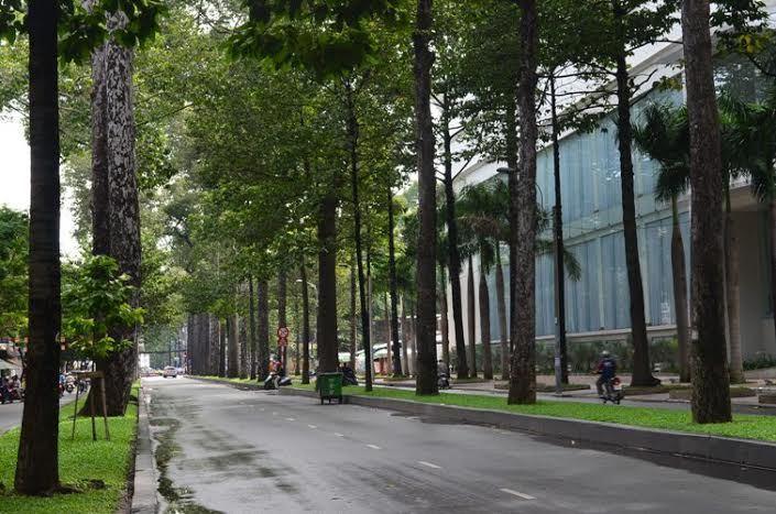 cổ thụ, đường phố, Sài Gòn, kỷ niệm, me xanh, cây dầu