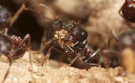 kiến, biến đổi khí hậu, khí CO2, con người