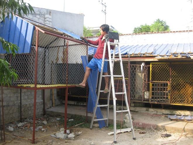 Trang trại chó đắt nhất hành tinh của đại gia Quảng Ninh