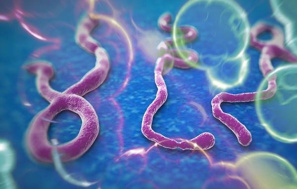 Virus Ebola có lây lan qua đường tình dục không?