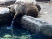 Gấu giải cứu quạ khỏi chết đuối dưới hồ