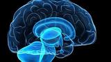 """Phát hiện vị trí của """"lương tâm"""" trong não người"""