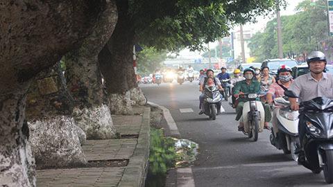 cổ thụ, metro, đường sắt đô thị, Hà Nội, môi trường, ô nhiễm, cây xanh, thủ đô, Thủ Lệ, giao thông