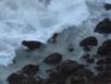 Cặp đôi tử nạn vì cố lên vách đá chụp ảnh tự sướng