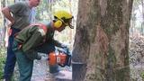 Hơn 14 triệu Euro để quản lý rừng bền vững