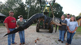 Bắt được cá sấu khổng lồ gần 500kg ở Mỹ
