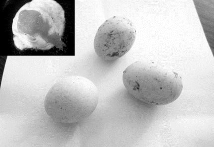 Phát khiếp trứng gà biến dị khác thường