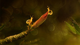 Khoảnh khắc lãng mạn của... côn trùng