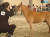 Ngựa lùn lần đầu lên sân khấu xiếc