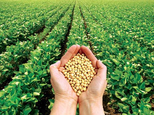 biến-đổi-gen, thực-phẩm, Việt-Nam, Nhật, biểu-tình, nông-dân