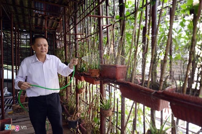 Người Hà Nội chi tiền tỷ phủ cây xanh kín nhà