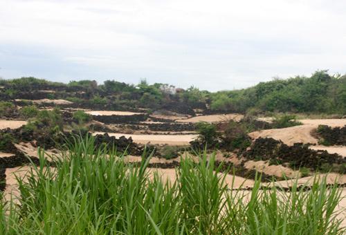 Độc nhất Lý Sơn: Ruộng bậc thang đá giữa trùng khơi