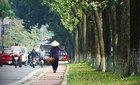 Hạn chế chặt hạ cây cổ thụ nơi tuyến đường sắt đi qua