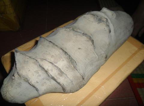 Xem bộ sưu tập 'mẫu vật hóa thạch triệu đô'