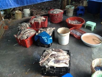 Mực tươi 'tắm trắng' trước khi bán ở chợ Long Biên