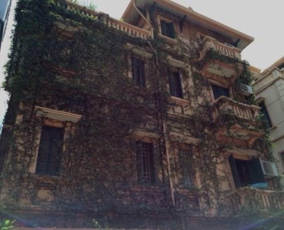 Hà Nội: Rộ mốt trồng cây leo phủ kín biệt thự