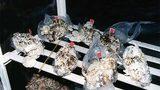 Công nghệ trồng nấm từ... bỉm bẩn