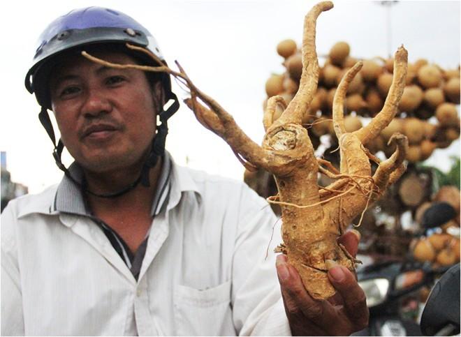 20 triệu đồng một gốc đinh lăng 62 tuổi ở Hà Nội