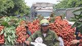 Sau vải, nhãn, VN hy vọng nông sản khác đến Mỹ