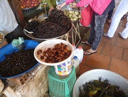 Dân nhậu Việt: Lùng chó, bẫy chuột, vợt nhện Campuchia